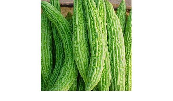 PlenTree Lot de 15 graines de Melon amer Bio Ampalaya