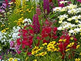 Bluttenteppich, Mix der Saison und Stauden Samen Mischung 100 g/20000 samen (keine Gräser),beliebteste Blumen für alle Farben des Regenbogens