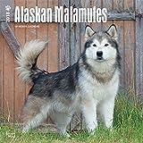 Alaskan Malamutes 2018-18-Monatskalender mit freier DogDays-App: Original BrownTrout-Kalender [Mehrsprachig] [Kalender] (Wall-Kalender)