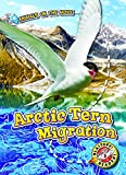 Arctic Tern Migration (Animals on the Move)