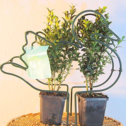 Buxus Figur Ente Komplett Set inkl. 2 Buchsbaum Former Pflanzen Tier -