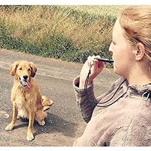 Acme 210.5Sifflet de dressage de chien–par Dog & Field 4Options de couleur