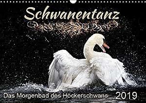 Das Morgenbad des Höckerschwans (Wandkalender 2019 DIN A3 quer): Ein Höckerschwan beim Schwanentanz. Er stürzt er sich wild ins nasse Element und ... (Monatskalender, 14 Seiten ) (CALVENDO Tiere)