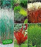 BALDUR-Garten Winterhartes Gräserbeet, 9 Pflanzen Ziergras Red Baron, Gräser-Trio, Zebragras, Ziergras Heavy Metal, Ziergras Indian Summer