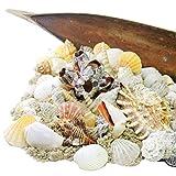 DEKO - MUSCHELMIX im Kokosblatt schöne echte maritime Dekoration -