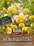 Obstsamen - Ananaskirsche Goldmurmel von Sperli-Samen