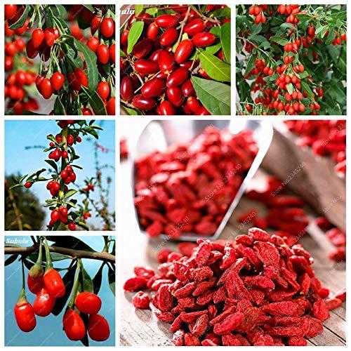 Go Garden 1000 stücke Rote Goji Beere Saftige Wolfsbeere Organische Erbstück Obst Anlage Für Garten Diy Lycium Chinense Kraut Nutzen für die Gesundheit Mispel: 300 Stücke
