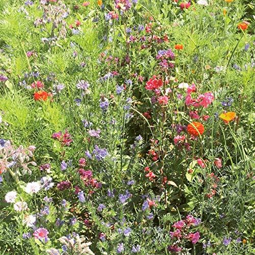 Veitshöchheimer Bienenweide Sommerblumenmischung Pastelltöne Bienenwiese Blumenwiese für ca. 40-50m², ca 50 Gramm