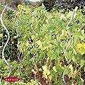 Aluspirale 10 Stk. H. 180 cm 10011 von bellissa - Du und dein Garten