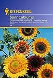 Kiepenkerl Sonnenblume - Riesenblumige Mischung