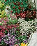Samt Stauden Blumen Mix Alpine - Große Auswahl für Ihren Rock Garden