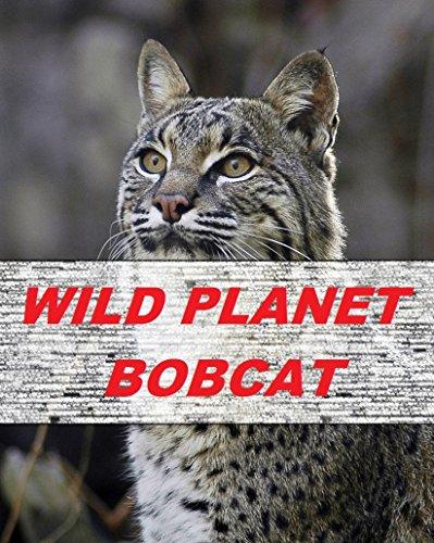 wild-planet-bobcat-english-edition