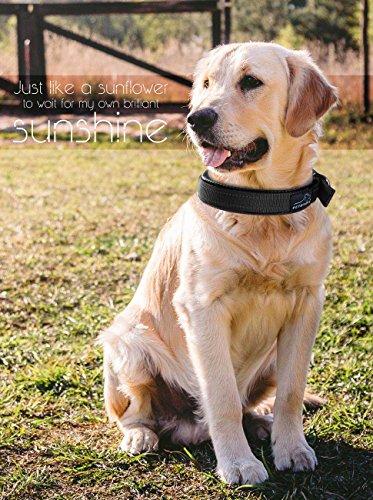 Hundehalsbänder Reflektierend, PETBABAB Gepolstert Verstellbar Nylon Training Hunde Halsband für Hunde Schwarz - 2