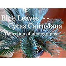 Blue leaves - - Cycas Cairnsiana (English Edition)