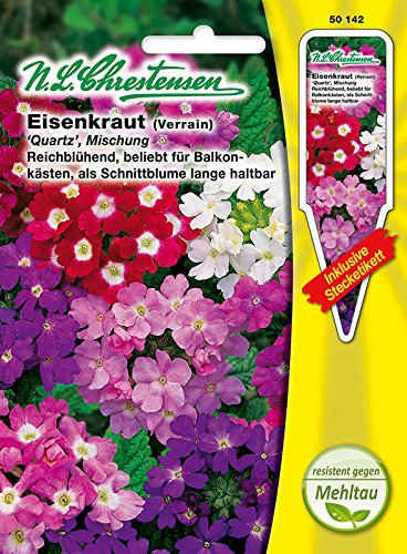 Eisenkraut 'Quart' Mischung, resistend, reichblühend, beliebt für Balkonkästen. Schnittblume ( mit Stecketikett) 'Verbena hybrida'