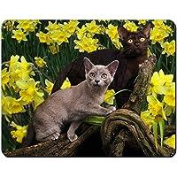 I gatti birmani amoungst Narcisi Tappetino mouse del computer pad