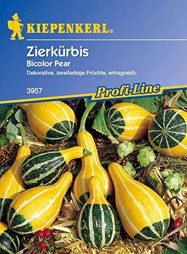 Kiepenkerl Zierkürbis Bicolor Pear