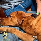 Golden Pets Softbürste | Ideal für kleine Hunde, Welpen, Katzen, Hasen und Meerschweinchen | Schutznoppen für besonders empfindliche Tiere | + Gratis E-Book Pflegehandbuch - 5