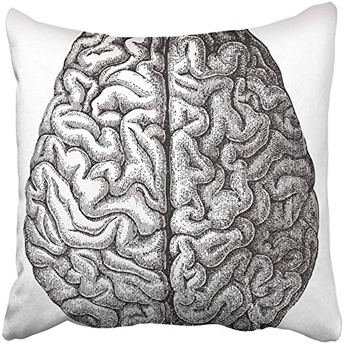 BZNX Throw Pillow Covers Print White Anatomy Human Brain Vintage from Meyers Konversations Lexikon 1897 Black Medical Old Antique 18 X 18 Inch Square Zipper Polyester Home Sofa Decorative Case (Konversation Sofa)