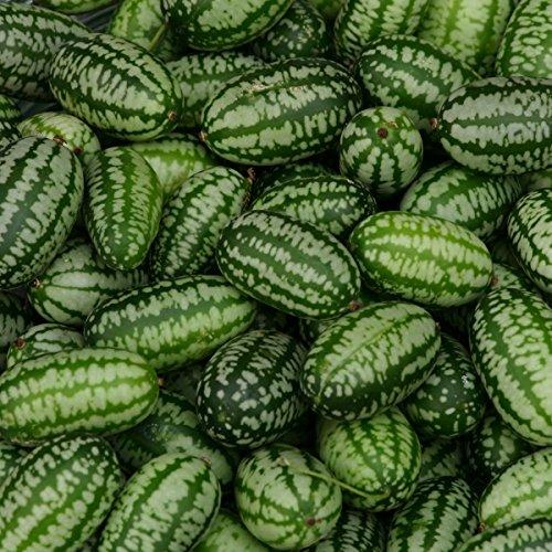 Gurke - Cucamelon - 20 Samen (Wassermelonen-gurken Samen)