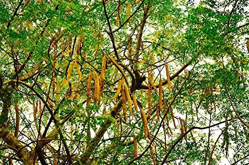 Bäume Farbe