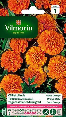 Vilmorin 5442541 Œillet, Orange, 90 x 2 x 160 cm
