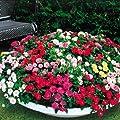 Bodendeckende Rosen Mischung von Meingartenshop bei Du und dein Garten