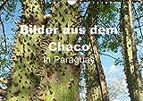 Bilder aus dem Chaco in Paraguay (Wandkalender 2019 DIN A4 quer): Vor mehr als 80 Jahren besiedelten die Mennoniten dieses unwegsame Buschgebiet und ... 14 Seiten ) (CALVENDO Natur)