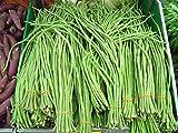 PLAT FIRM Semi germinazione dei semi PLATFIRM-Online Legend Giardino lattuga Gerico Estate Crisp calore tollerante D349 (Verde) 500 sementi biologiche