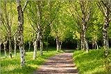 Posterlounge Leinwandbild 120 x 80 cm: Idyllischer Birkenwald im Frühling von Andreas Wonisch - fertiges Wandbild, Bild auf Keilrahmen, Fertigbild auf echter Leinwand, Leinwanddruck