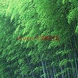 20pcs / sac en bambou noir graines, plantes vivaces Très rares Bambou Phyllostachys Nigra Nature maison jardin