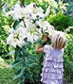 BALDUR-Garten Tree-Lily Pretty Woman 3 Stück Baumlilien Lilium von Baldur-Garten - Du und dein Garten