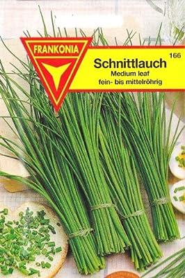 Schnittlauch, Allium schoenoprasum, ca. 200 Samen von Philipp Klein GmbH - Du und dein Garten