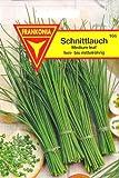 Schnittlauch, Allium schoenoprasum, ca. 200 Samen