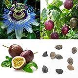 Homeofying - Semi di frutta della passione, 40 pezzi, Passiflora Edulis viola, frutto esotico tropicale