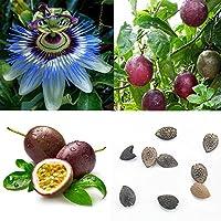 Homeofying 40pcs Tropical exotique Vigne Passion Violet Passiflora Edulis Fruits Graines