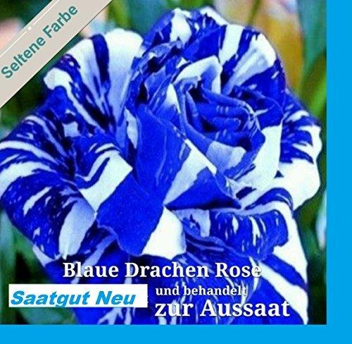 20x Blaue Drachen Rose weiß blaue
