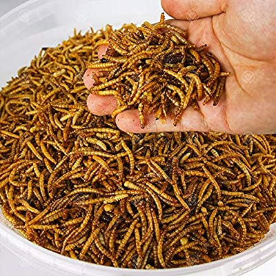 5KG Wild Bird Dried MEALWORMS from Mealworms