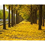 AOFOTO 10x8ft Row Of Yellow Tree Photography Studio Backdrop Fall Background Autumn Nature Scenic Fallen Leaves Avenue Kid Lovers Adult Artistic Portrait Wedding Photoshoot Props Video Drape Wallpaper