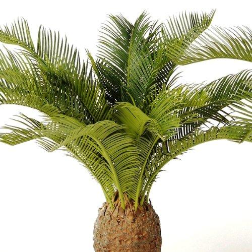 artplants Set 2 x Künstliche Cycus-Palme mit 19 Palmwedeln, Deluxe, 65 cm – kleine Dekopalme/Künstliche Palmen