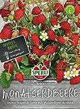 Monatserdbeeren, SPERLING's Bowlenzauber