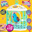 Little Live Pets Tweet Talking Birds with Cage (Styles may vary)