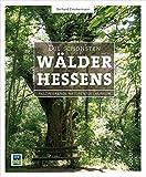 Die schönsten Wälder Hessens: Faszinierende Naturentdeckungen - Gerhard Zimmermann