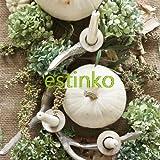 10pcs Mondenschein-Kürbis-Samen Glatte Enthäutete Weiß Kürbis-Samen Seltene Kürbis Ornament Pflanze für Carving-Hausgarten Bonsai Seed