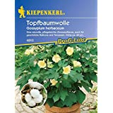 Saatgut Baumwolle (Topf-)