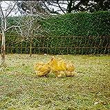 Eider Elektronetz Geflügelnetz, Hühnernetz 112cm, Einzelspitze - 50m - Hühner, Gänse, Puten, Geflügel - Geringe Maschenweite im Unteren Bereich