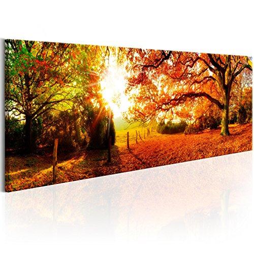 SENSATIONSPREIS! Bilder 115x40 cm - XXL Format - Fertig Aufgespannt – TOP – Vlies Leinwand - 1 Teilig - Wand Bild - Kunstdruck - Wandbild - Natur Wald Landschaft Herbst Baum Sonne c-B-0252-b-a 115x40 cm B&D XXL