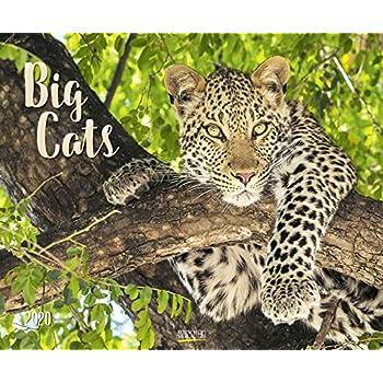 Big Cats 2020