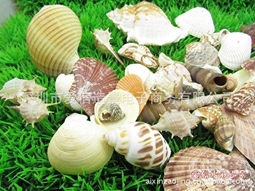 DALIU-GREAT Impostare shell naturale dei ricci di mare conchiglie conch conchiglia specie decorare la scena 250G