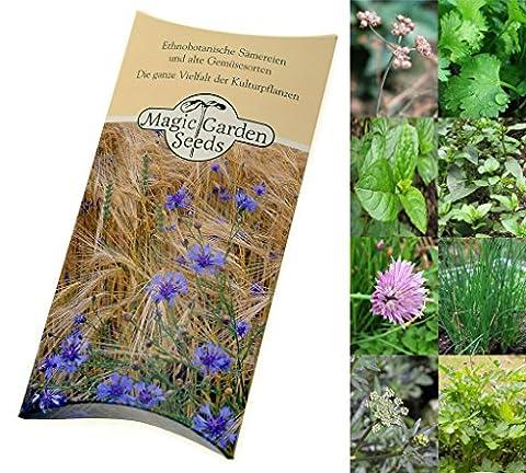 Kit de semences: Sélection d'herbes du Brésil 'Cheiro Verde', 4 variétés d'herbes culinaires traditionnelles brésiliennes, présentées dans une belle boîte-cadeau